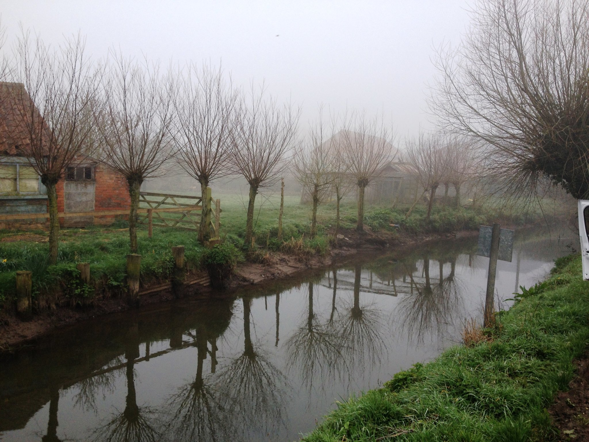 Willow-Pollards-Somerset-Levels-Reflection-2