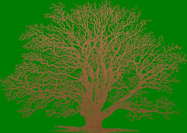 Oak-praise